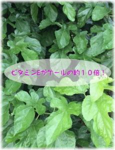 青汁,柿の葉