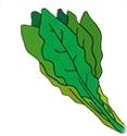 葉野菜 ほうれん草