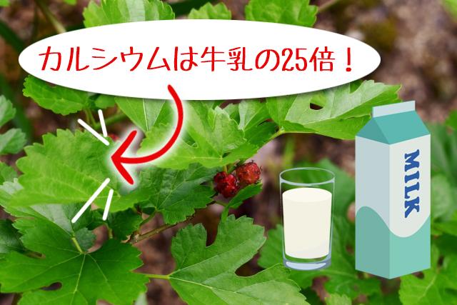 桑の葉,カルシウム